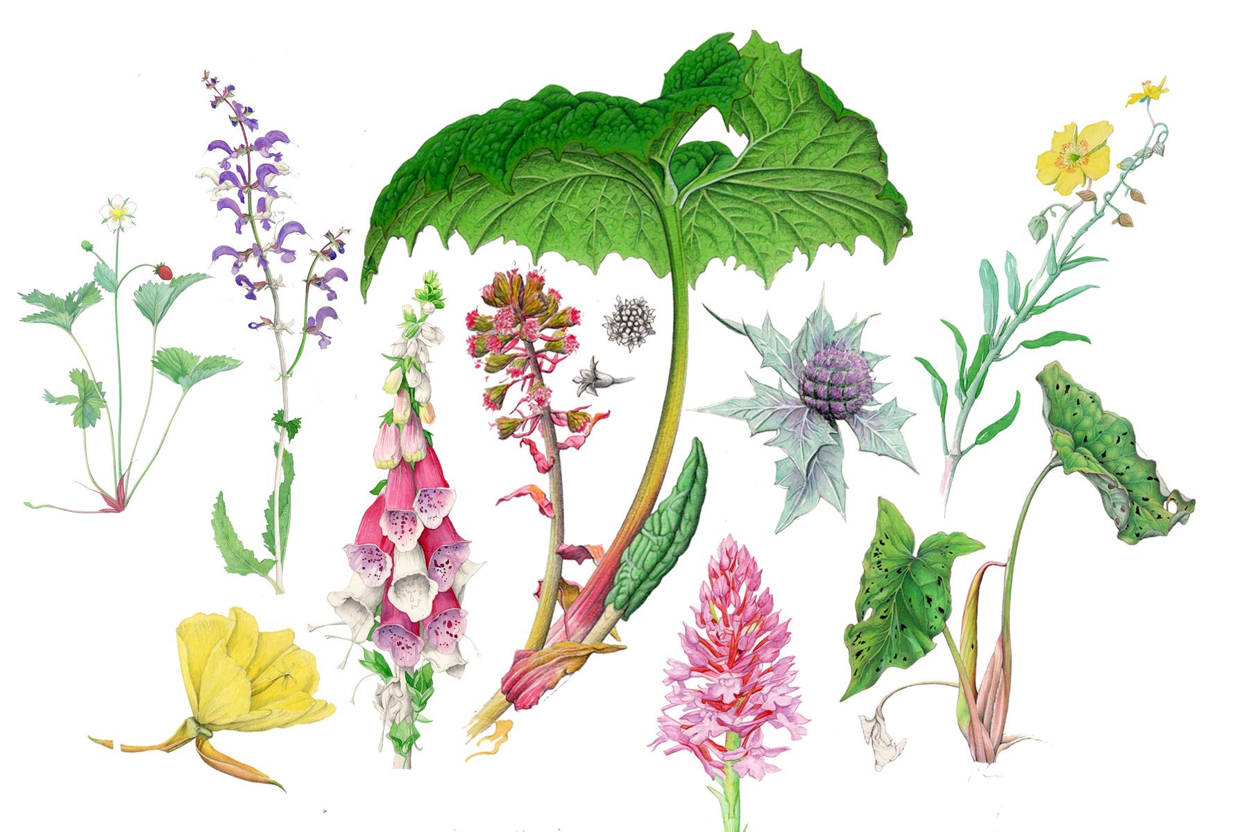 Plantes botaniques - Philippe Marle