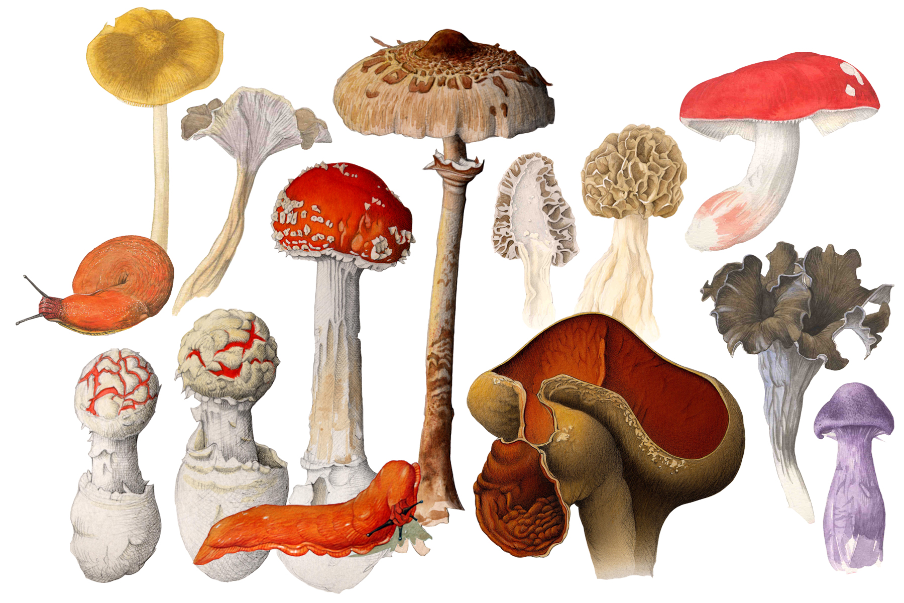 mycologie-hd