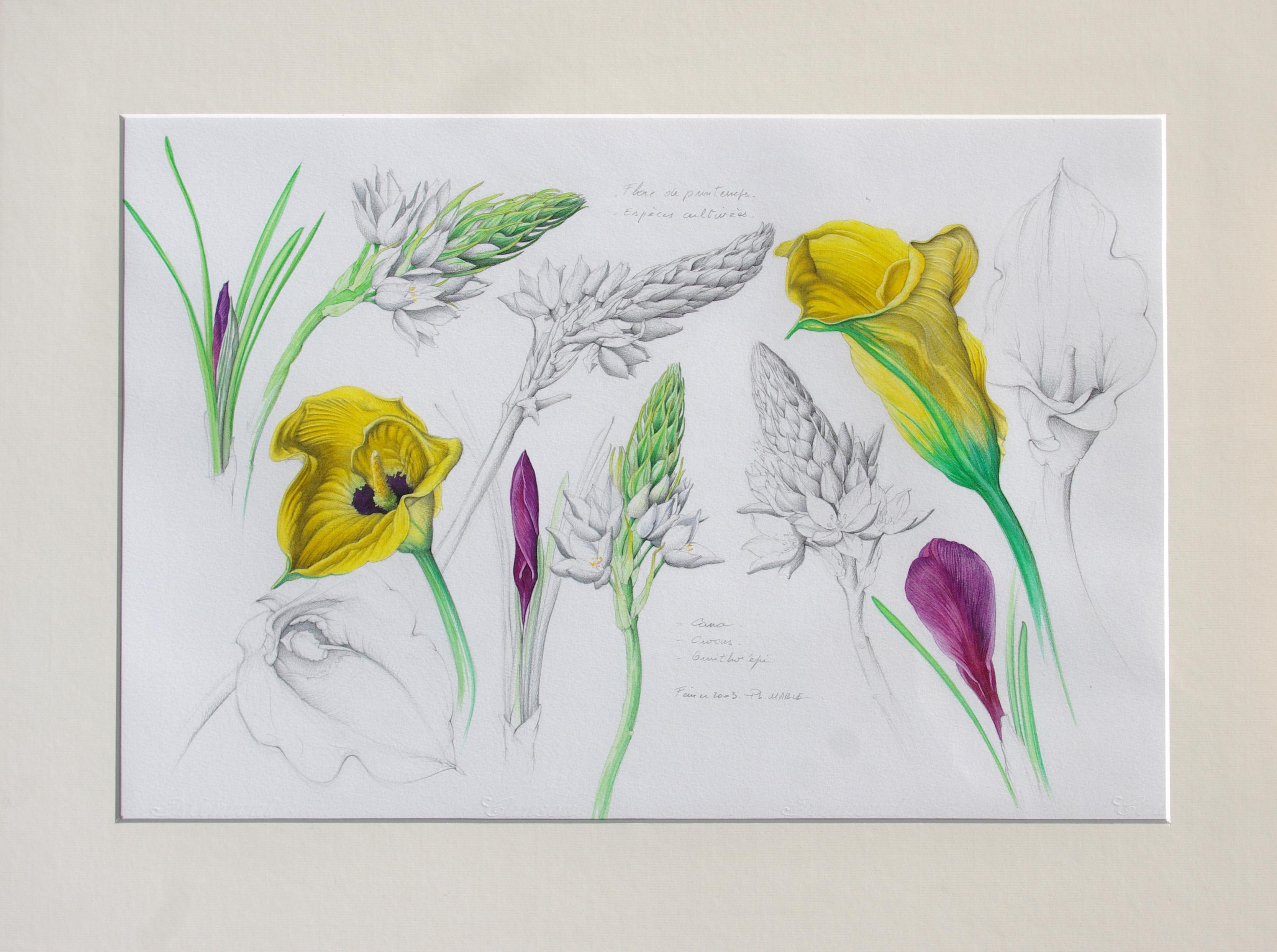 Fleurs horticoles