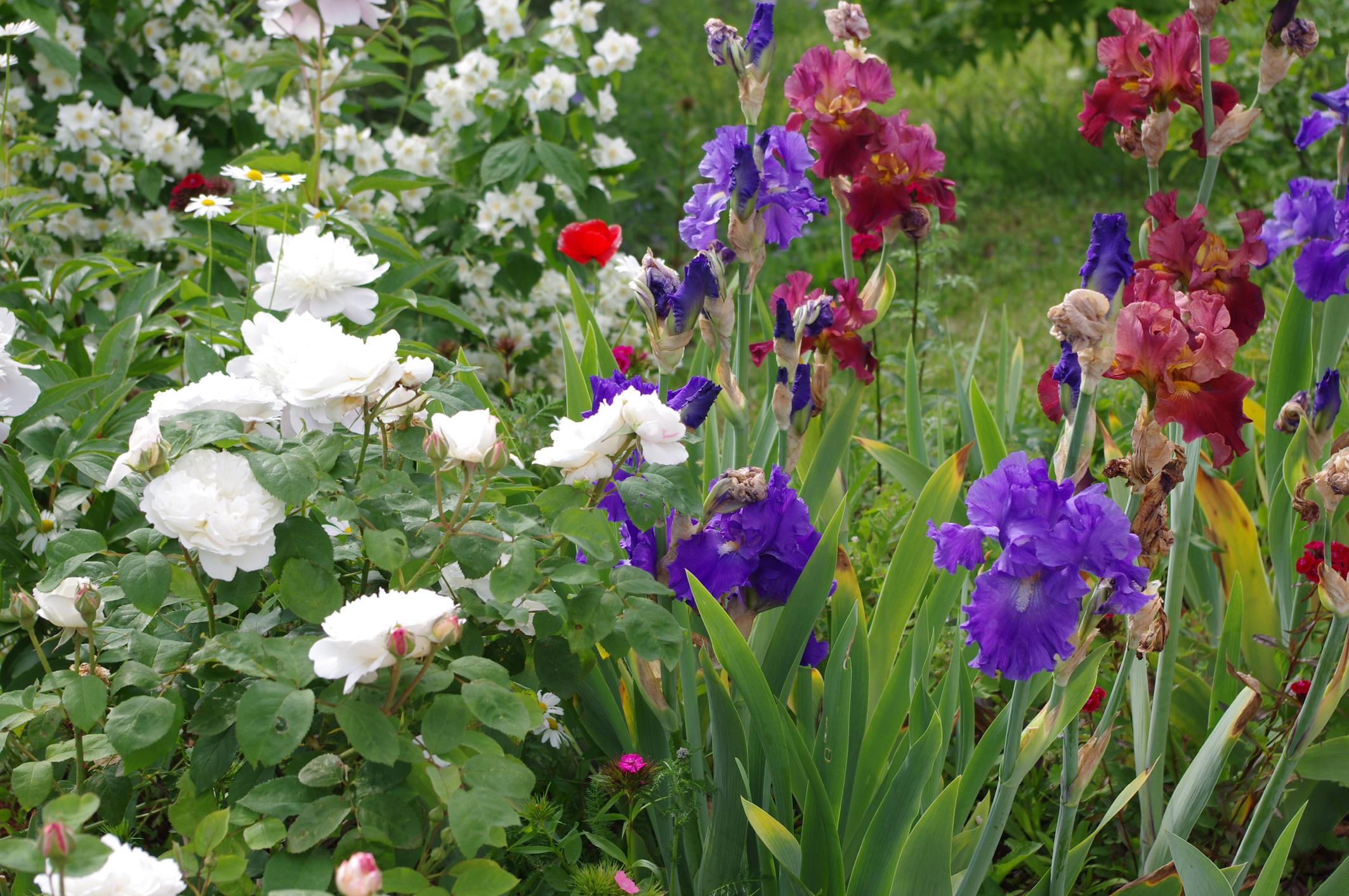jardin anglais 1. red jpg